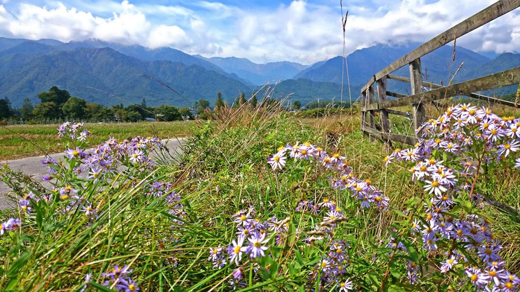 ノコンギクの花から大天井岳方面を