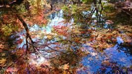 霊松寺、光と水と紅葉のコラボ1