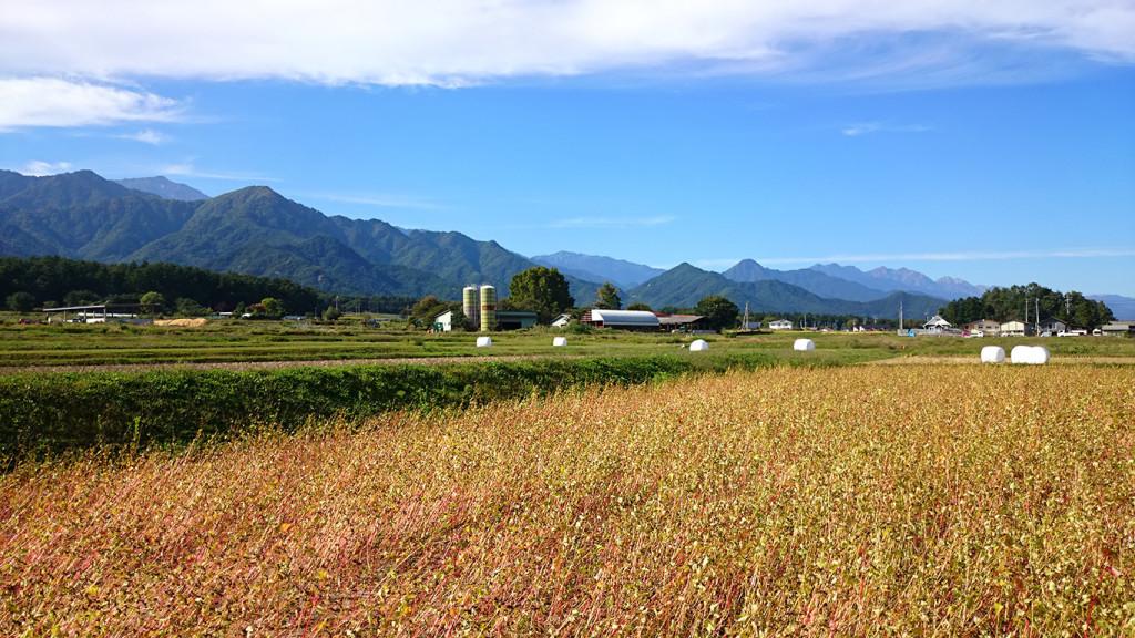 茶色く色づいた蕎麦畑から大町方面のお山を