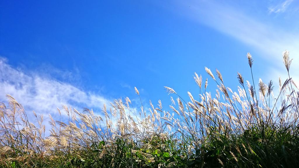 ススキと秋の青空