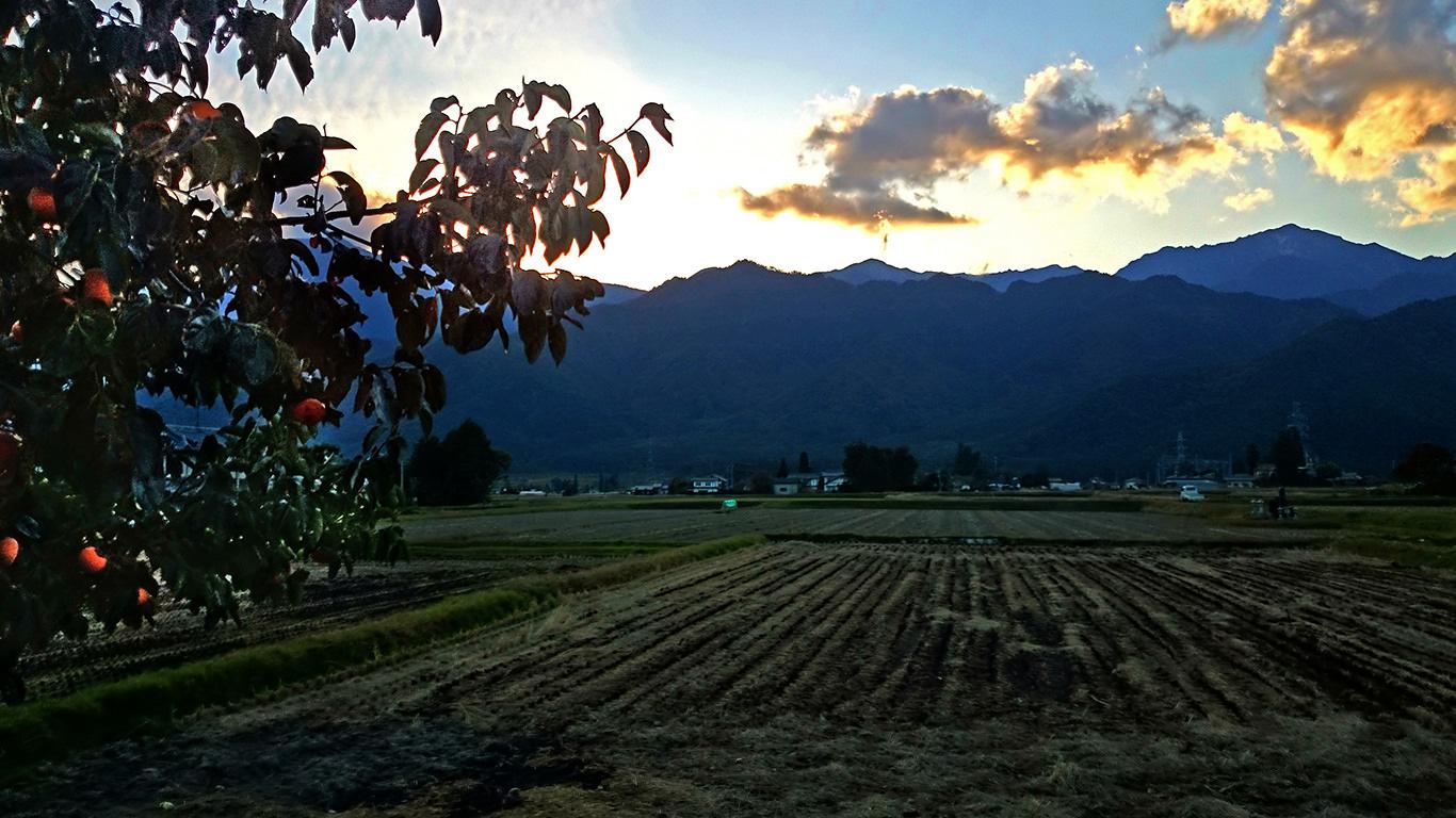 松川村から見る夕暮れ時の山と田んぼと柿の実