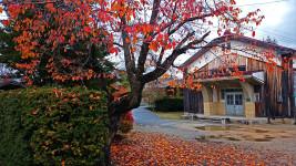 桜の紅葉と新屋公民館