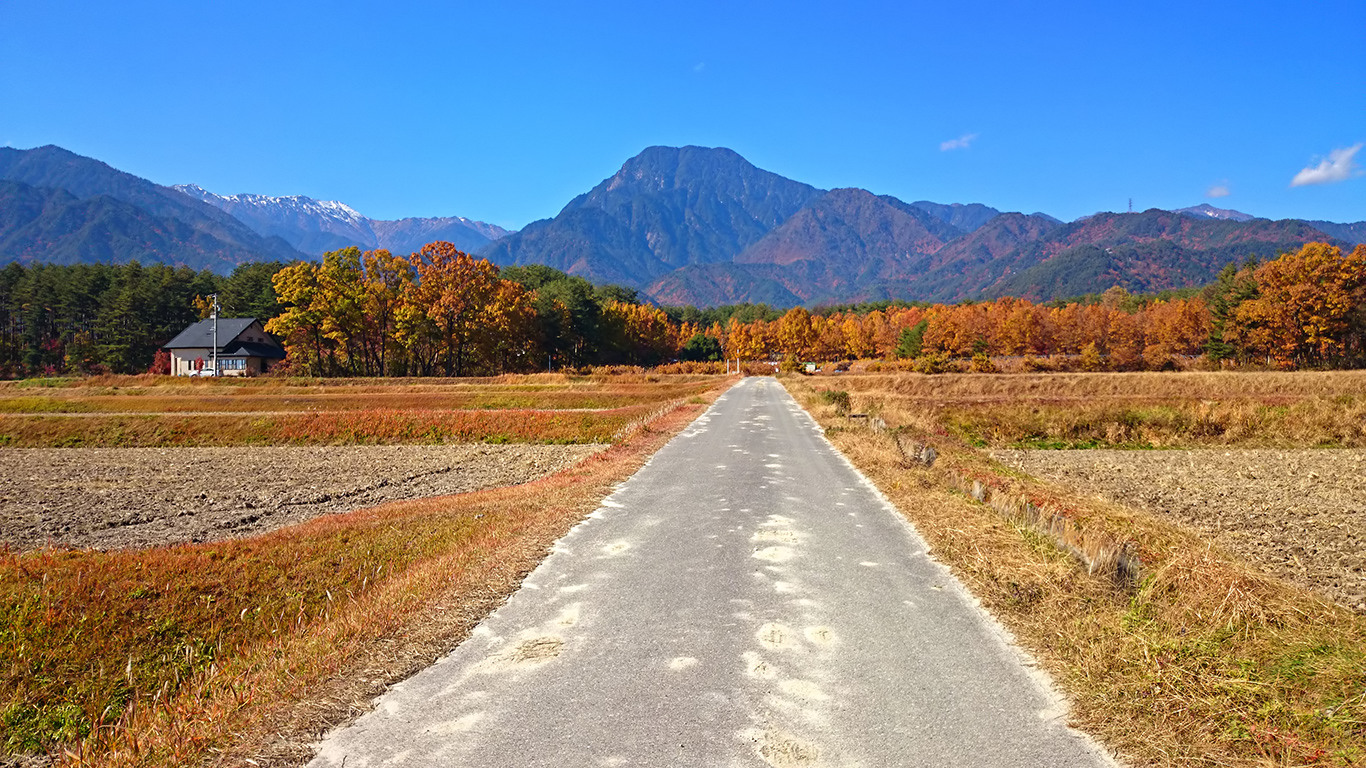 天蚕飼育場のクヌギの黄葉と有明山