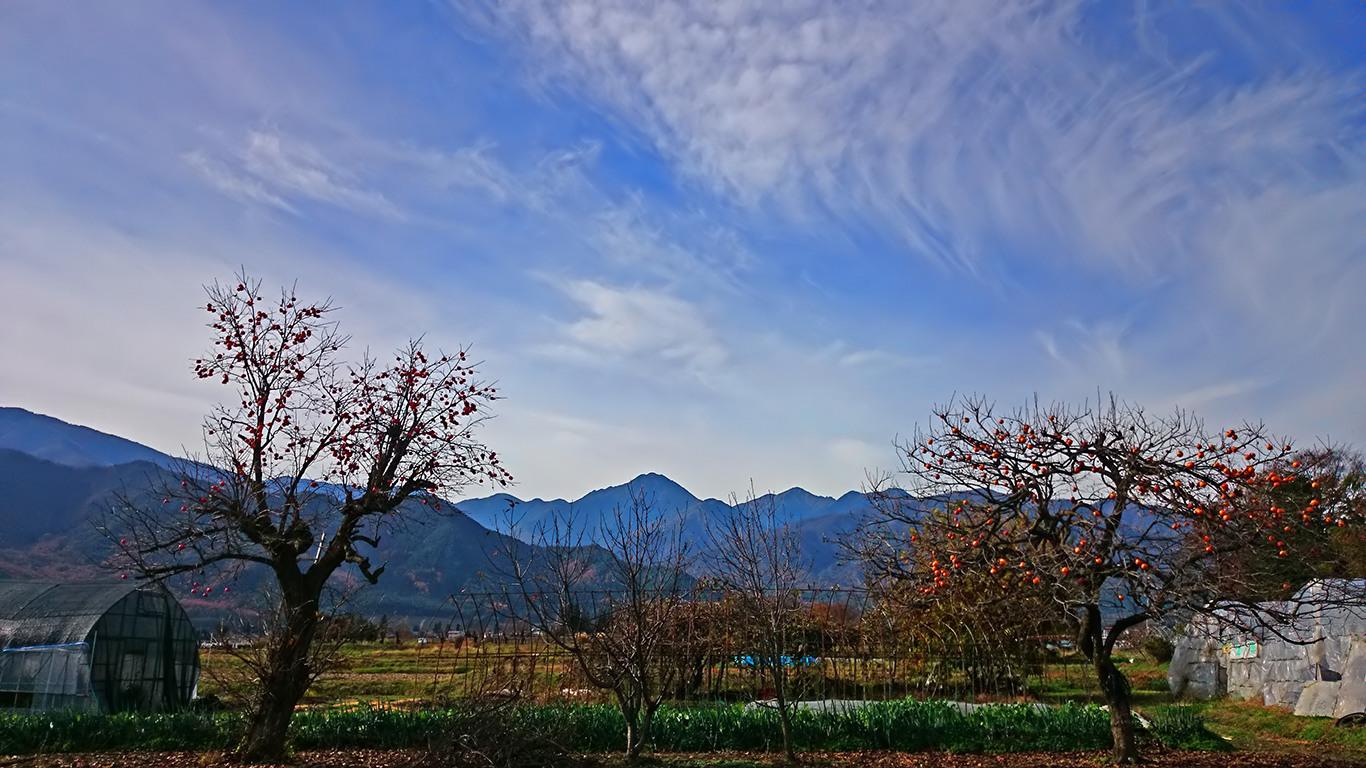柿と常念岳