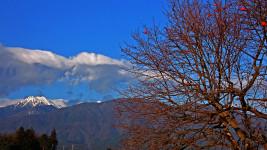 常念岳と葉の散った柿の木