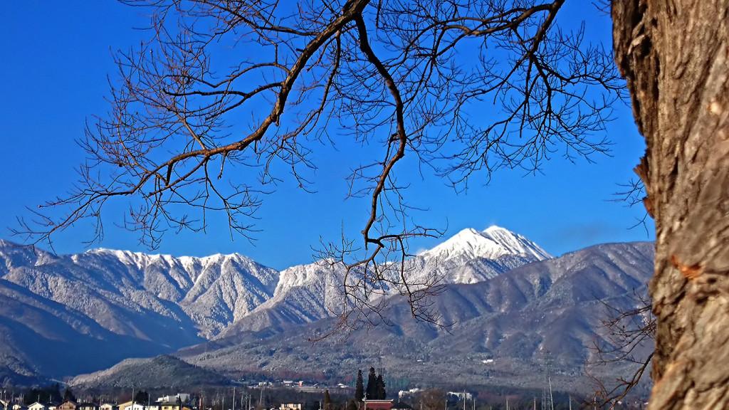 柳の大木の枝の間から白い常念岳を。