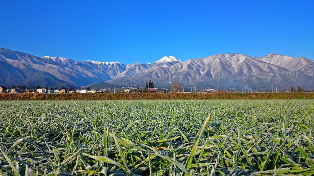 常念岳と霜の下りた麦畑