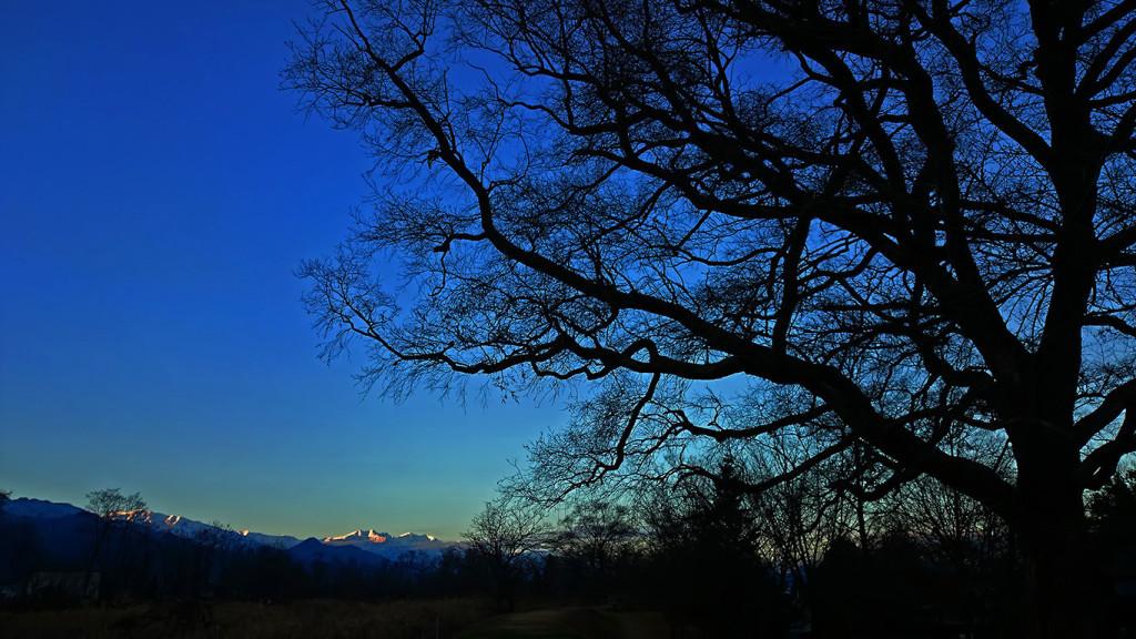 柳の大木と夕日に染まる大町方面のお山