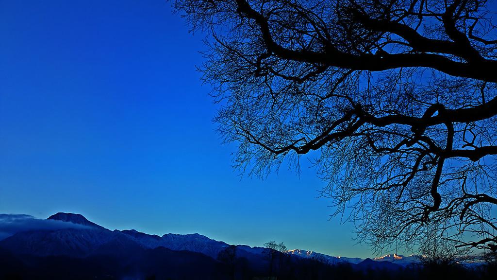 柳の大木と夕暮れ時の有明山、大町方面のお山。