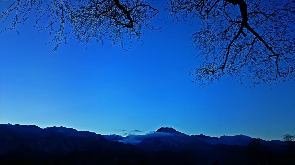 柳の大木の枝と有明山