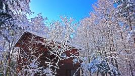 雪で白くなった木の枝と青空