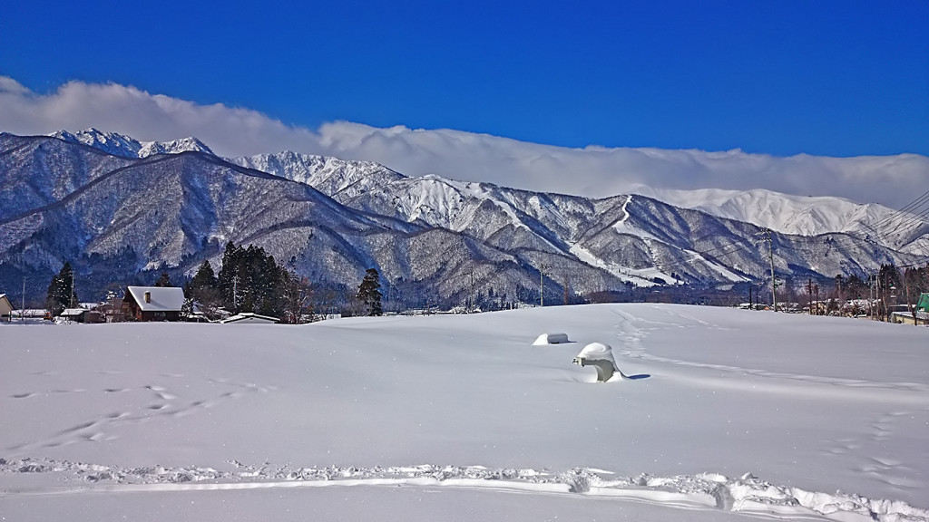 なにげない白馬の雪原