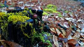 有明の林の中の苔とどんぐり