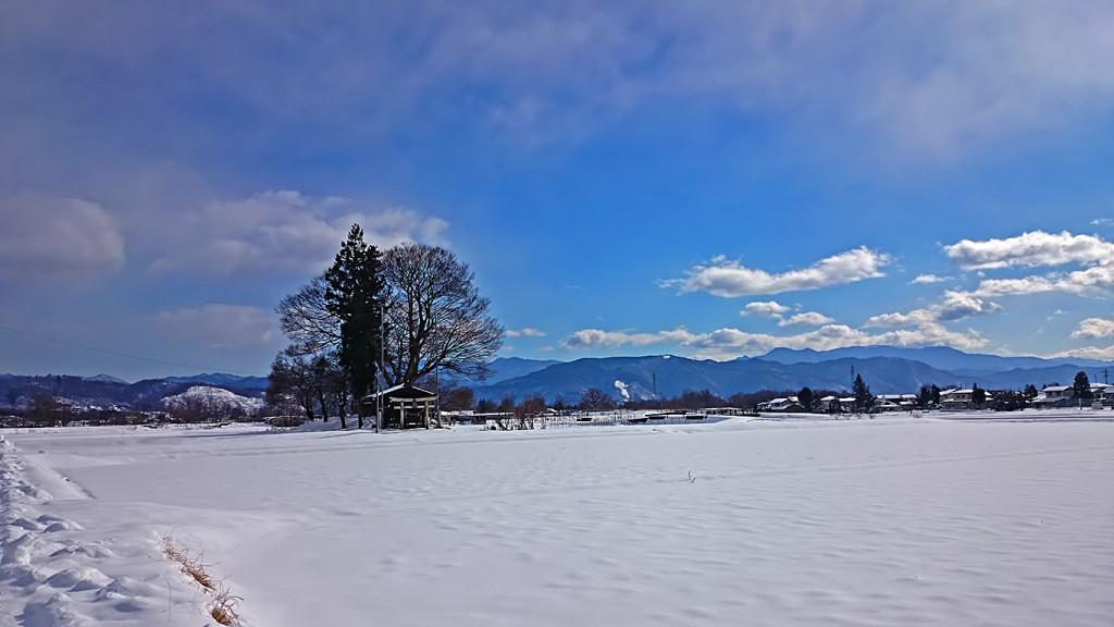 大塚神社の鎮守の杜