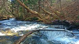 油川の氷柱