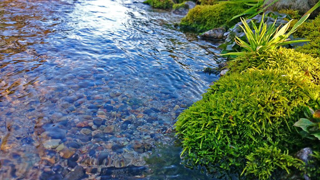 わさび田の用水路の苔の緑