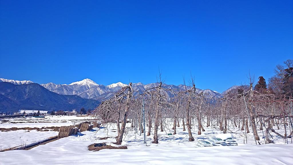雪景色のリンゴ園から見る常念岳