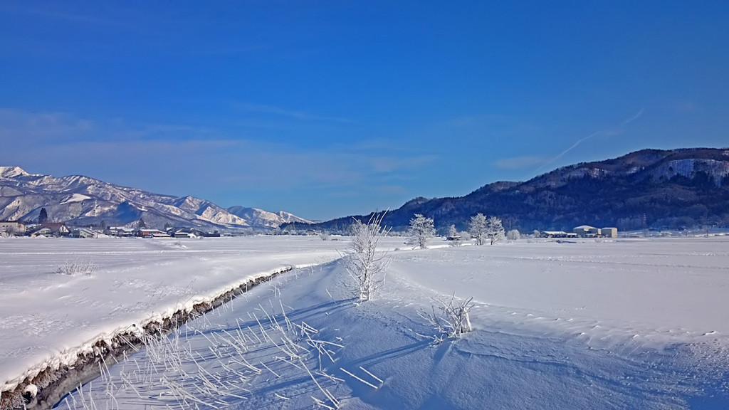 白馬の樹氷1