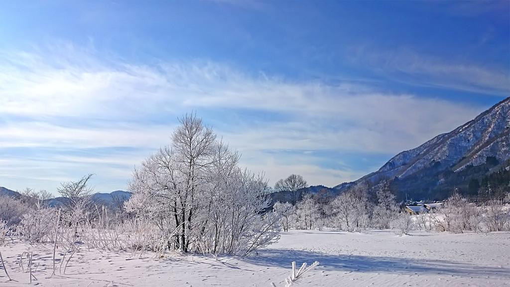 白馬の樹氷2