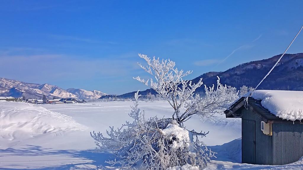 白馬の樹氷3