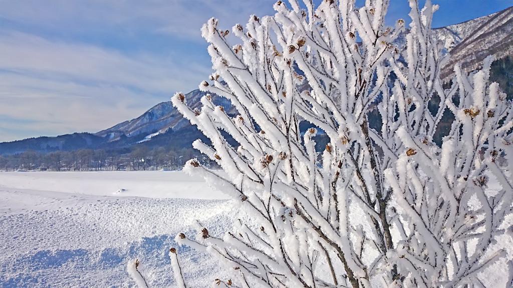 白馬の樹氷5