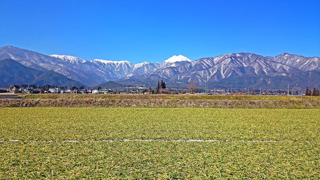 雪解けの麦畑と常念岳