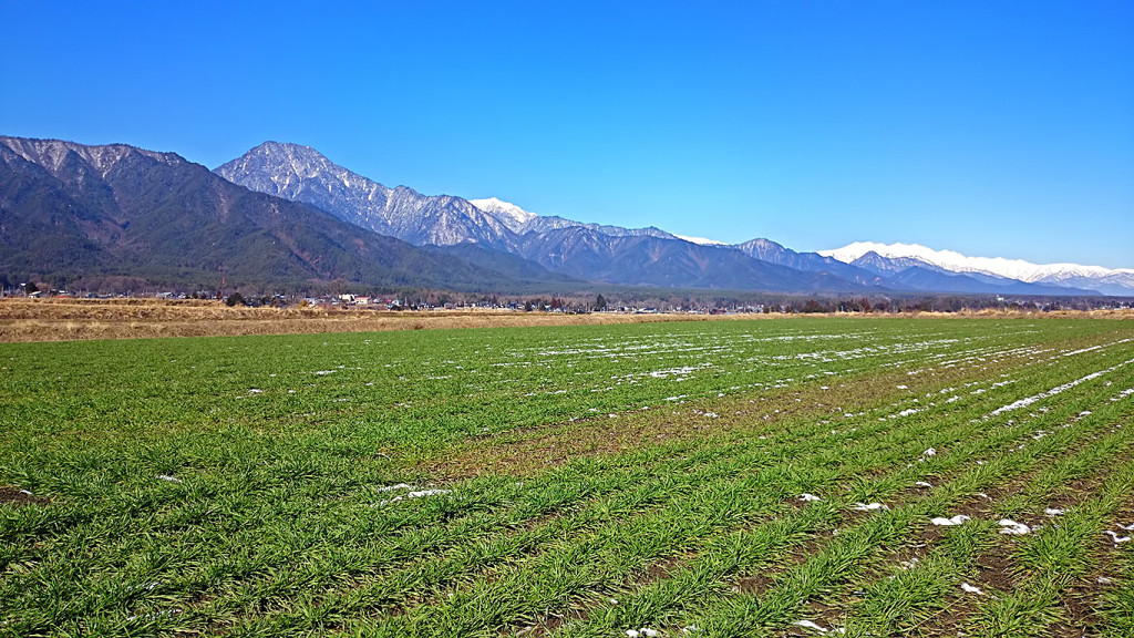 雪解けの麦畑と有明山と大町方面のお山