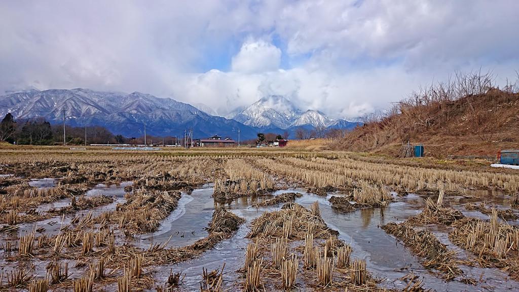 凍った田んぼの水溜まり
