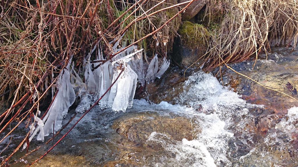 川べりの氷柱