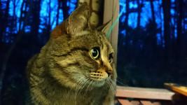 ベランダに棲みついている猫