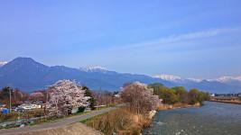 桜と柳の新緑に彩られた穂高川とアルプス