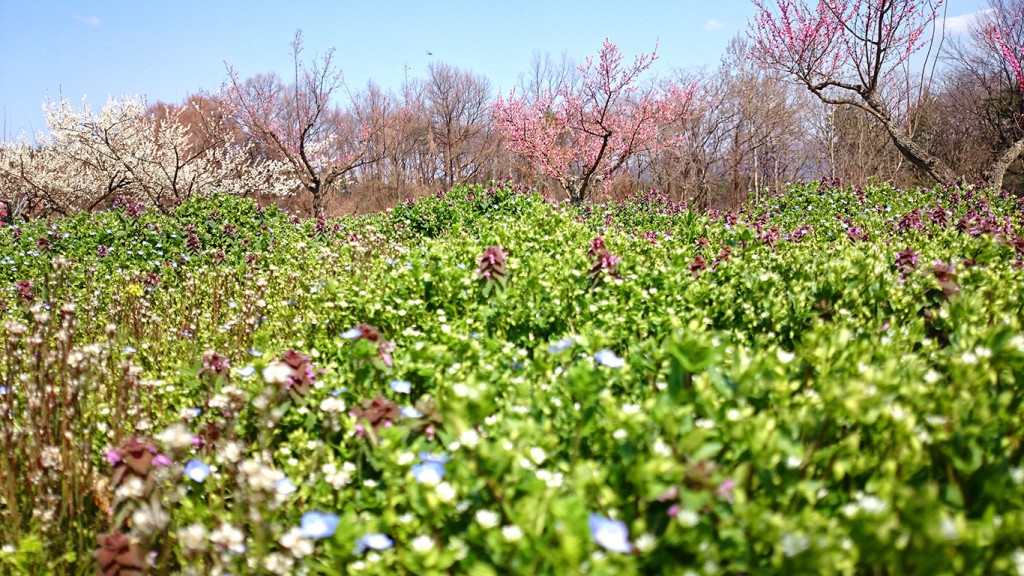 松川村山際の何気ない春の風景