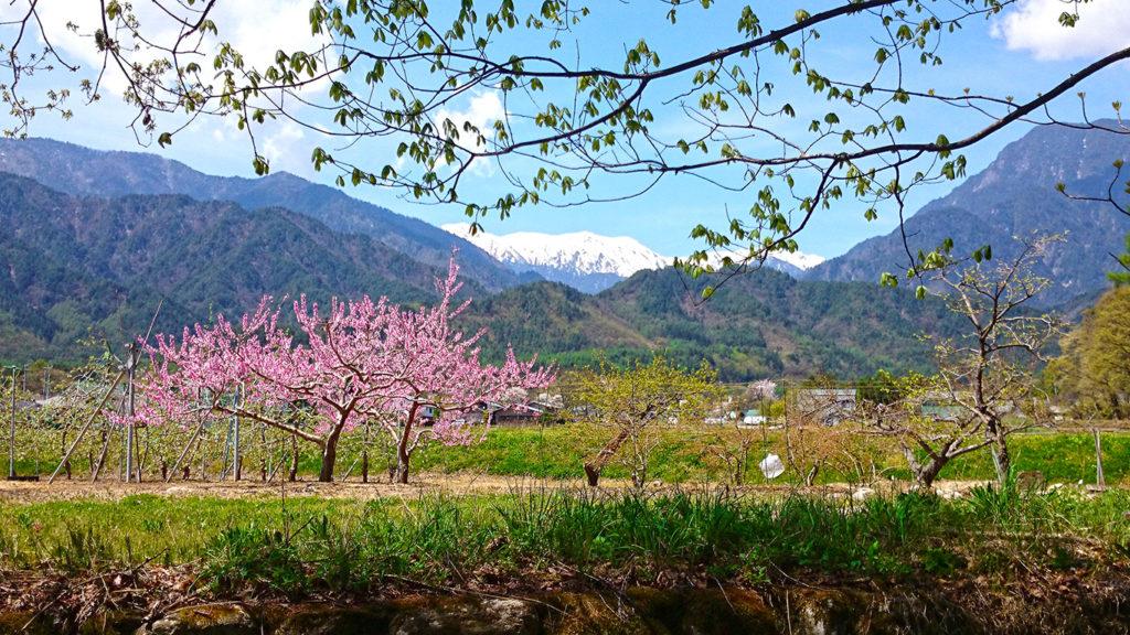 新緑と桃の花と大天井岳