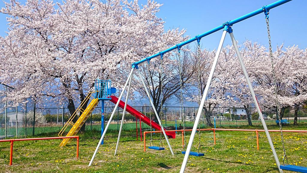 桜とタンポポが咲く公園