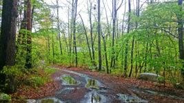 雨に濡れる新緑の小道
