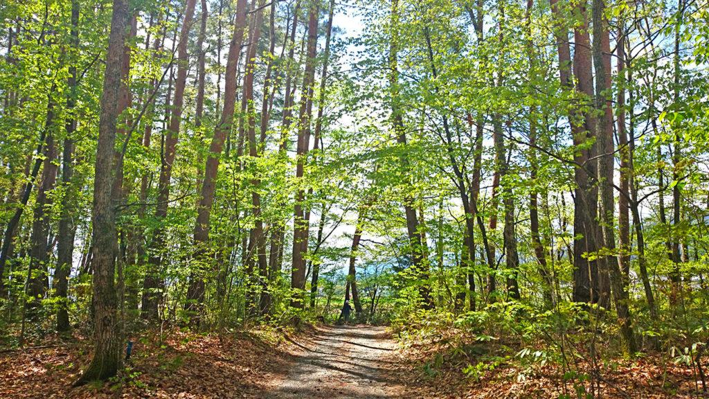 ベニバナイチヤクソウが生える林の小道