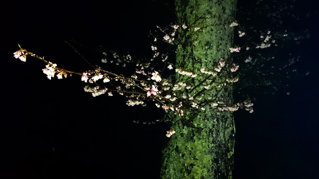 正真院前の桜の小枝