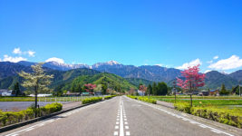 ハナミズキが咲く道路とアルプス