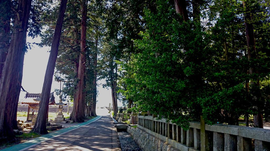 穂高柏原の日吉神社の杉並木