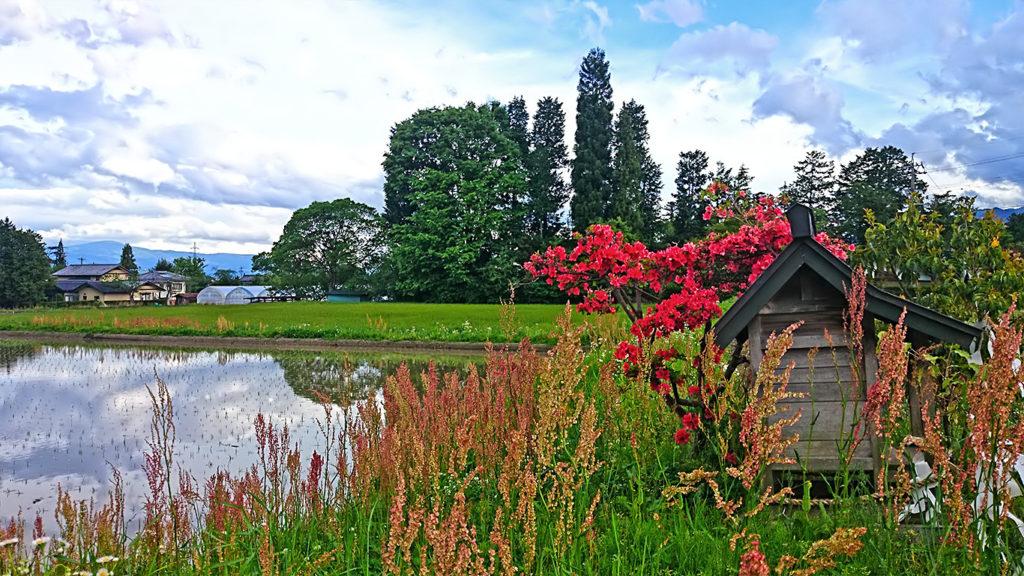 田んぼ脇の小さな祠とツツジの花
