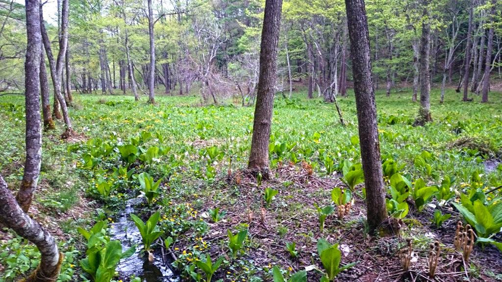 居谷里湿原ないを流れる水