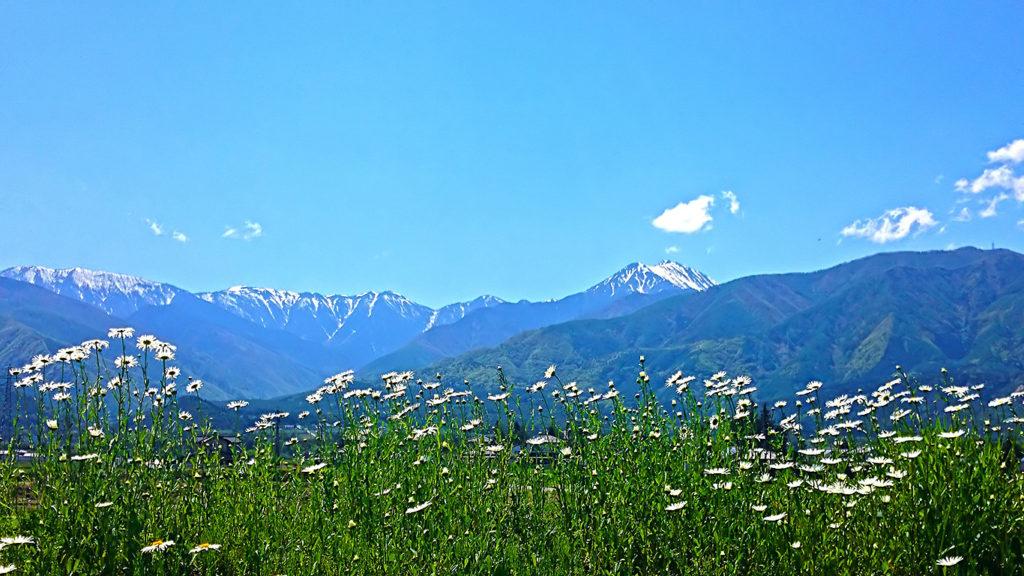 土手に咲く白い花と常念岳