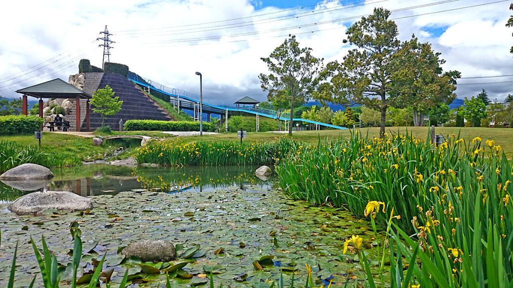キショウブの花咲く常念ふれあい公園