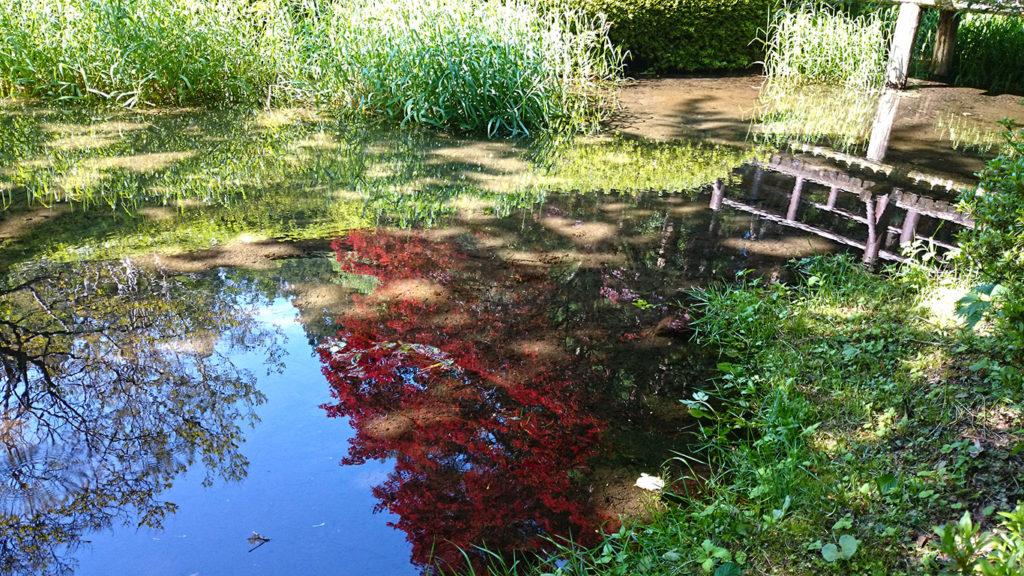 満願寺の池に映る空