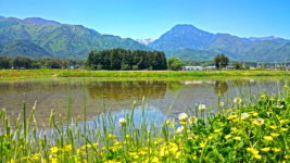 オヘビイチゴの花咲く田んぼの畔と鎮守の杜、有明山。