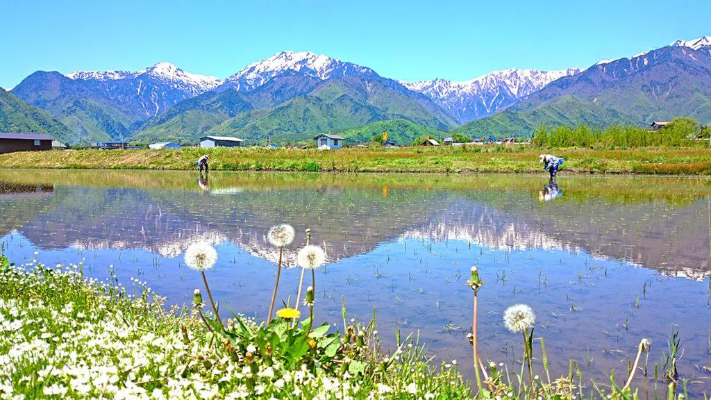 古き日本の良き風景 手植えの田植え