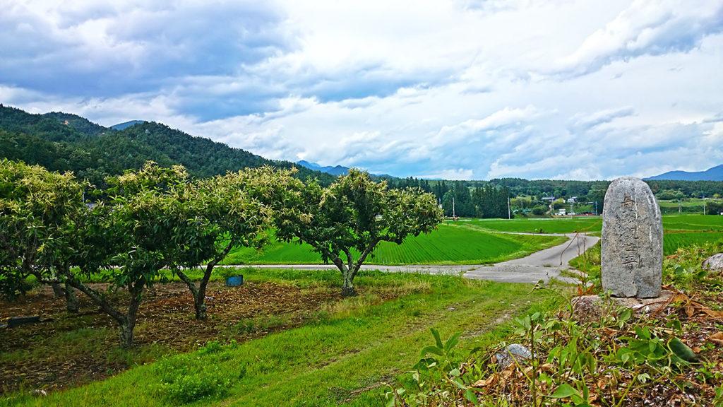 田園地帯に佇む馬頭観音の石碑と栗の花