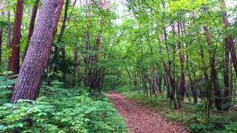 小雨の林の中の小道