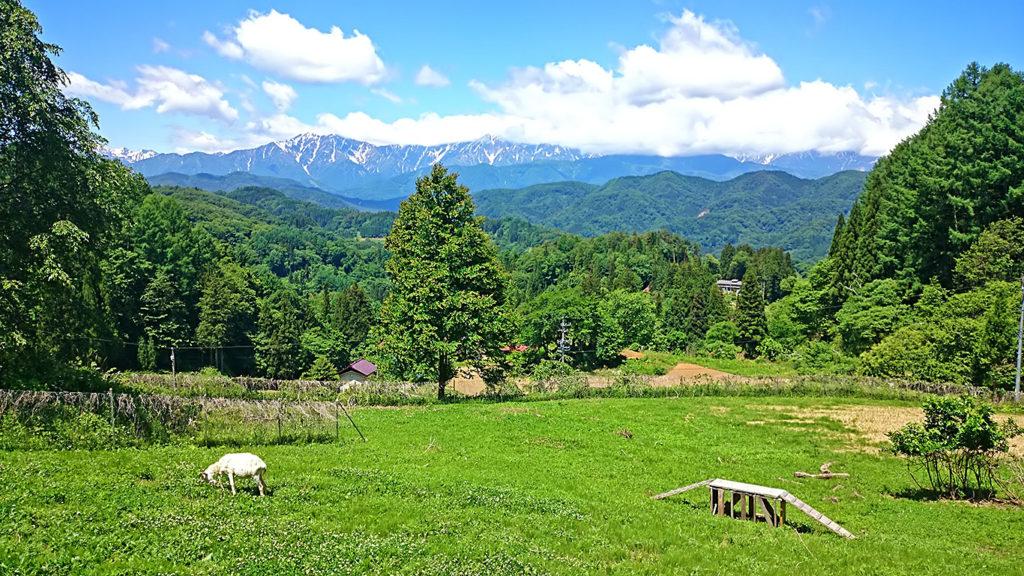 ヤギと小川村立屋からの風景