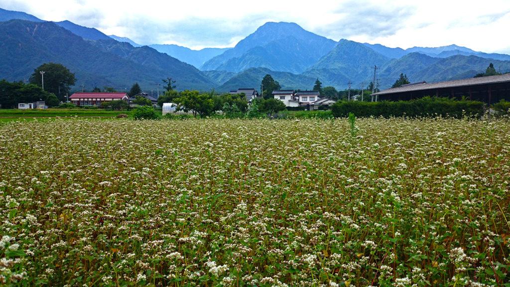 有明山と蕎麦畑
